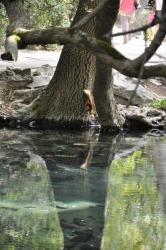воронцовский парк (6)