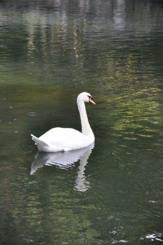 воронцовский парк (4)